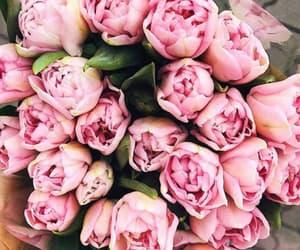 flower, flowers, and peonies image