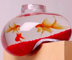 cool, design, and fish tank image