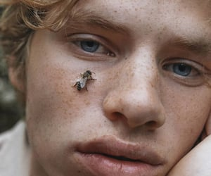bee, blonde, and freckles image