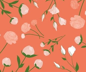 orange, wallpapers, and roses image