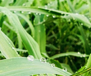 dew drops, nature in the morning, and diamonds from the sky image