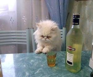 cat, martini, and meme image