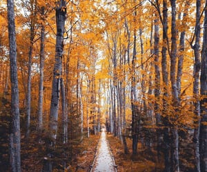 nature, autumn, and aesthetic image