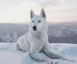 white, animals, and beautiful image
