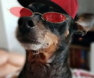 cachorro, vermelho, and engraçado image
