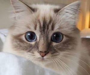 cat, pet, and tumblr image
