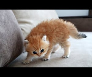 adorable, aww, and baby animals image