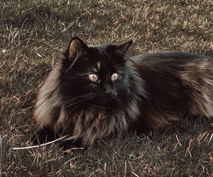 black, cat, and catlover image