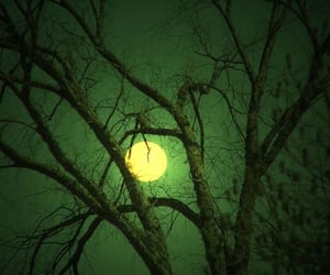moon and tree image