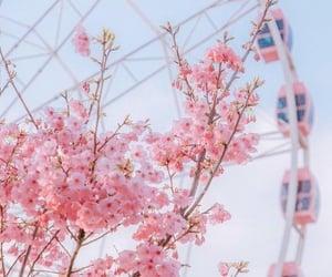 pink, bush, and ferris wheel image
