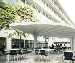 canopy image
