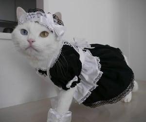 cat, animal, and maid image