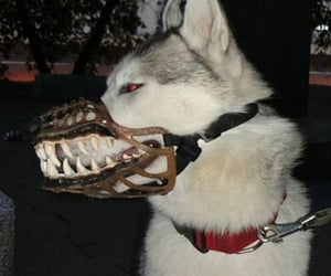 dog, dark, and grunge image