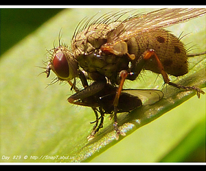 fly eye, compound eyes, and eyes of a fly image