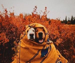 dog, animal, and autumn image