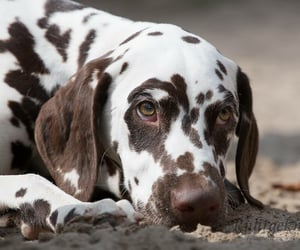 dogs, animals, and pets image