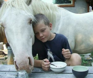 creature, pet, and white horse image