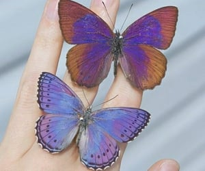 aesthetic, purple, and butterfly image