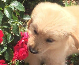 aesthetic, dog, and flower image