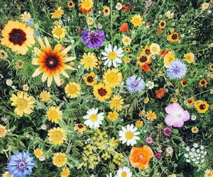 colors, daisy, and field image