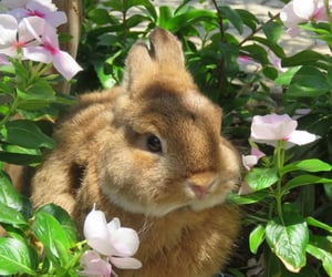 bunny, animal, and cute image