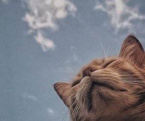 cat, animal, and sky image