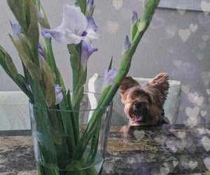 flowers, puppy, and yorkie image