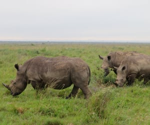 animals and Rhinos image