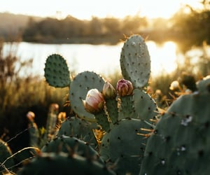 nature, cactus, and flowers image