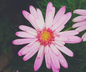 flor, flores, and flower image