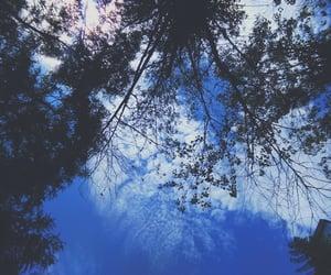 arvore, sky, and céu image