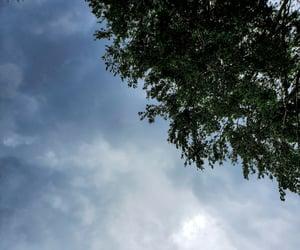 backyard, home, and nature image