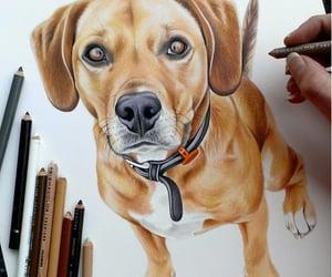 art, drawings, and animal drawings image
