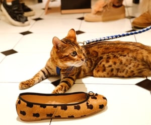 animals, cats, and fashion image