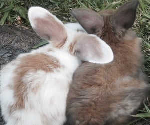 animals, couples, and Relationship image