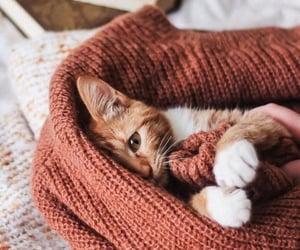 cat, animal, and autumn image