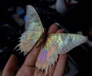 beautiful, butterflies, and beauty image