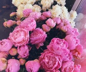flowers, love, and peonies image