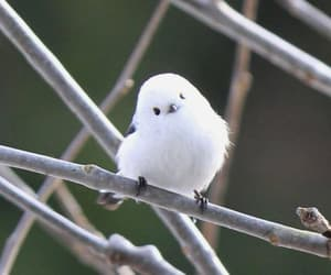 cute, bird, and white image