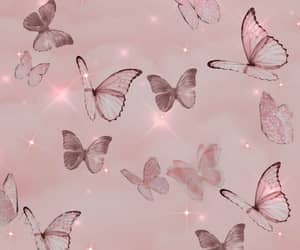 butterfly, cute, and wallpaper image