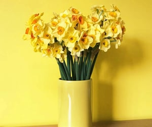 daffodils, decor, and flores image