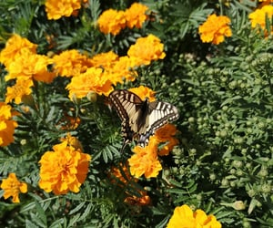butterfly, colors, and green image