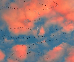 birds, clouds, and moon image