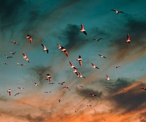 birds, sunset, and landscape image