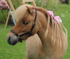 adorable, horse, and horses image