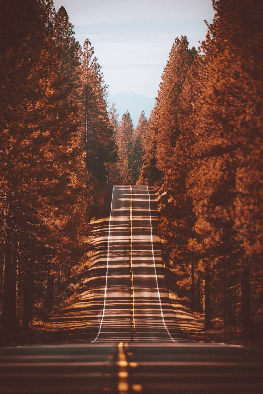 autumn, travel, and forest image