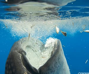 gif, snack time, and whale shark image