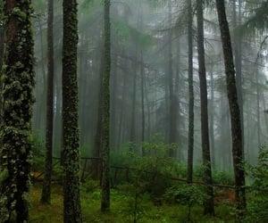 creepy, explore, and fog image