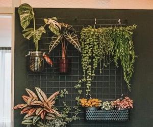 decor, green, and natural image