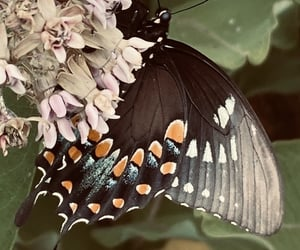 background, butterfly, and iphone image